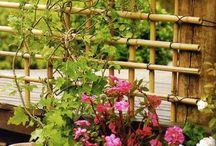 Gardens / Gardening and garden ideas