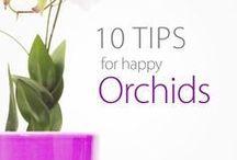 orhids