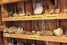 Nature Interpretive Centre / Check out what our nature centre has to offer