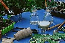 Jardinage bouture soins des plantes et légumes