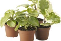 Mini hage / Mini planter, mini blomsterpotter og lignende...