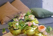 floral shells