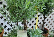 Container gardening / by Nancy Hewitt