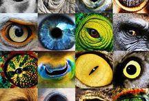 photo . animal / ..