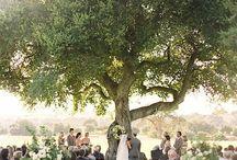 family  aniversary ceremony