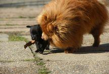 cute dog lani