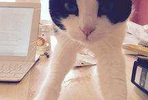 Daisy / housecat