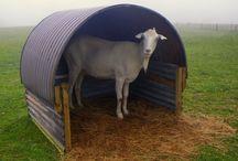Goat Care