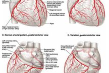 Fisiologia y anatomía
