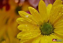 Beauty Flower / Bunga Indah, mekar mewarnai hari