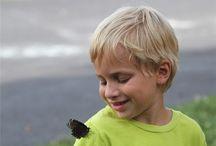 Attracting Wildlife / Nest box plans, feeder styles, types of bird seed, butterfly hummingbird gardens