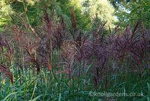 GRASSEN /GRASS