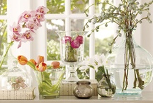 Flowers and Containers