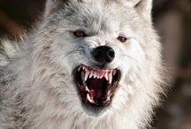 wolfe<3