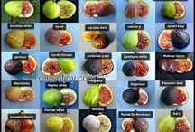 Figs jujube and fruit trees