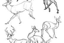 рисунки животных в движении