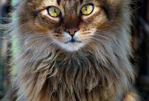 Katte puser