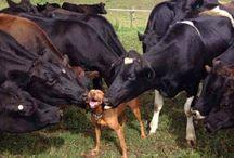 Notizie e Foto dal mondo degli animali! / Notizie, foto e curiosità dal delizioso mondo degli animali