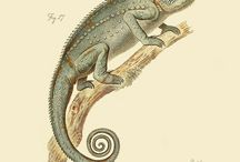 Vintage reptiles