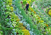 Jardiner - Permaculture
