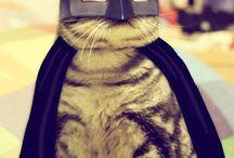 Batman / Batman is awesome