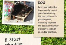 Garden / Plants / by Staci Huxtable