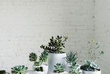 Kaktukset ja sisäkukat