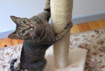"""Pets / Gatinhos, cãezinhos ou qualquer outro animal de estimação fofinhos e algumas """"engenhocas"""" para os nossos amiguinhos!"""