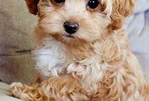 Cutie puppy