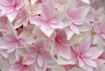 Flowers / by Vic Eschweiler