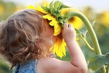 sunflowers :) / my favorite:  strong, happy, hearty & turn their faces to follow the sun all day long.  / by Marji Stark