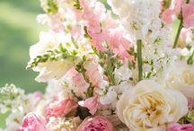 Beeldschone Bloemen