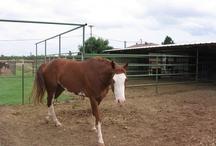Clients Horses