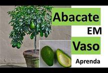 Vasos de Plantas Diversas