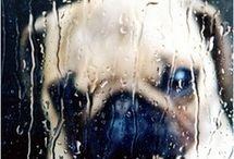 doghy