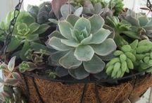 cesta colgante de plantas