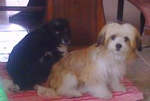 Lluna i Nana & Others animals / My Dogs & Others