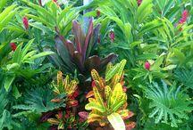 Tropical Garden Inspirations
