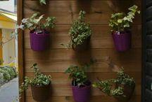 Vertical Gardens / Small space gardening