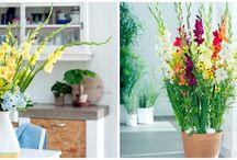 Zomer in huis! / Deze bloemen en planten zorgen voor een instant zomergevoel in huis!