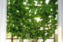 piante rampicante