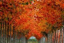 season&nature