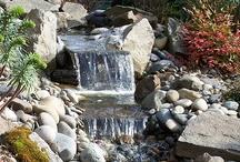 Project: water garden
