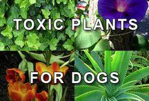 Plants/Balcony/Dog