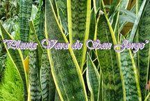 plantas suerte