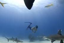 Ocean Lovers / by Rita Antonieta Neves