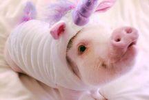 +=Pigcorn