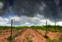 AVA ( American viticultural areas )