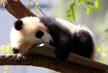 PANDAS <3