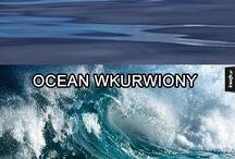 Memy pl